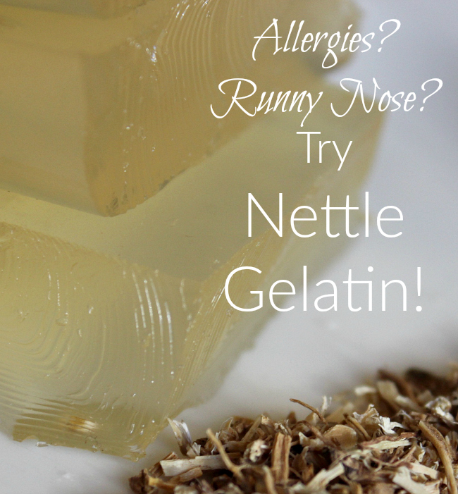 Suffering from allergies?  Looking for a natural remedy? Try nettle gelatin!