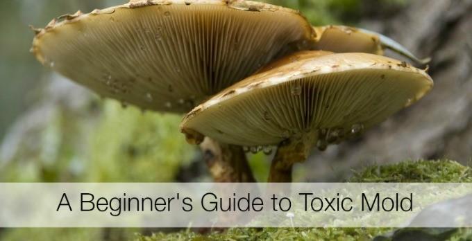 Toxic Mold: Where Do I Begin?