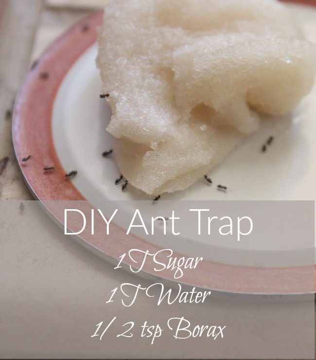 Ant invasion Try this simple DIY Ant Trap!