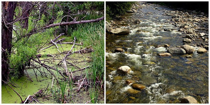Stagnant water and flowing water collage