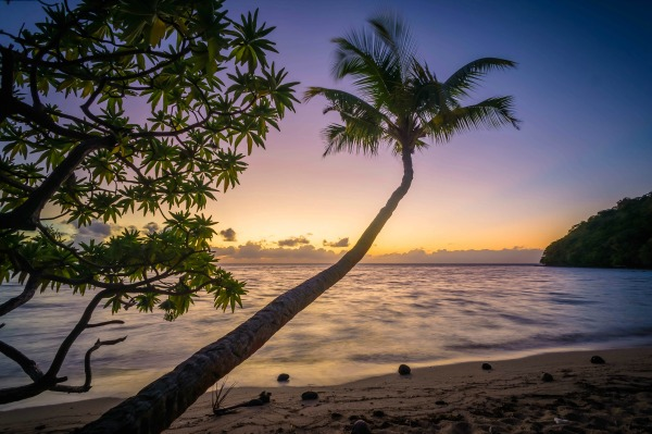 palm tree on beach 3