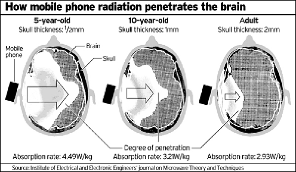 cell phone absorption