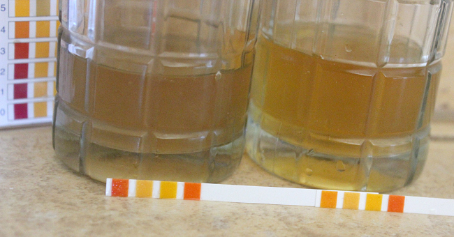Testing Kombucha with pH strips