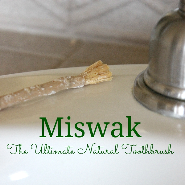 Miswak The Ultimate Natural Toothbrush!