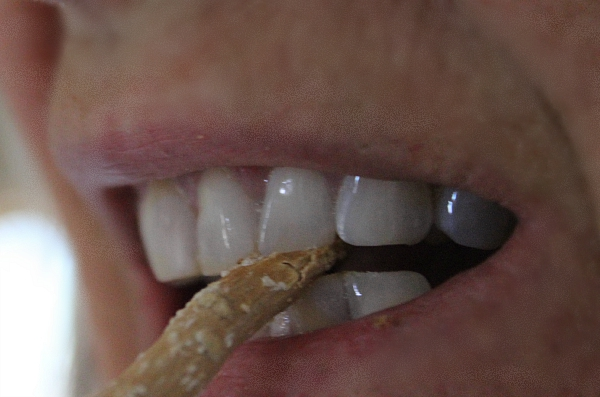 Miswak in teeth- natural toothbrush