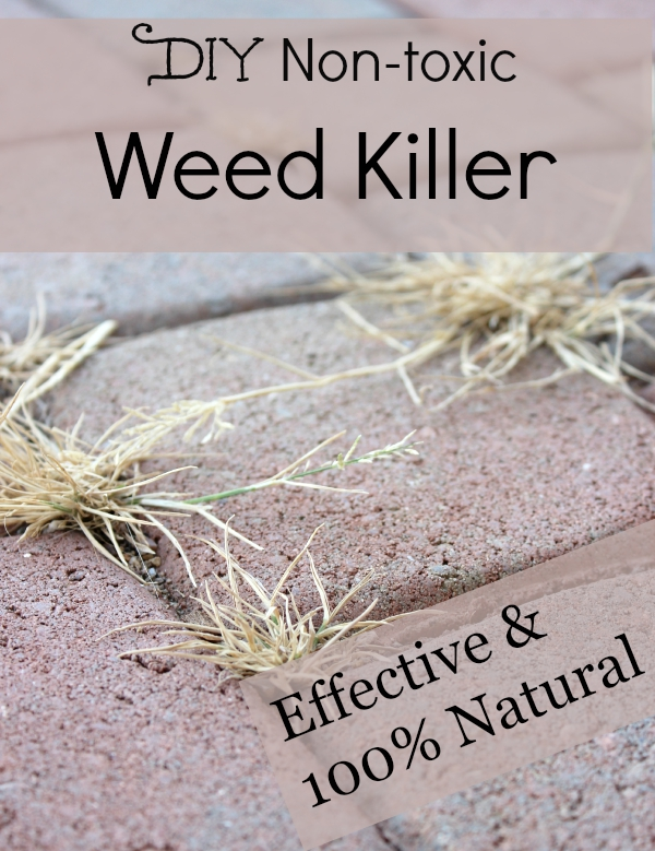 Looking for safe alternatives to Roundup Trying to avoid chemicals Try this non-toxic and effective weed killer! #glyphosate #chemicalfree #nontoxic