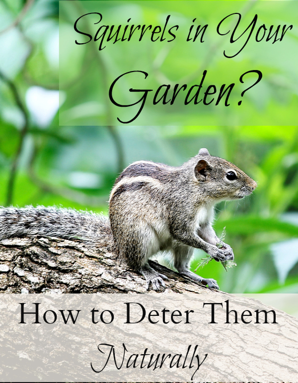 How to keep squirrels out of your garden it takes time - How to keep squirrels away from garden ...
