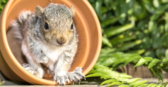 How to Keep Squirrels Out of Your Garden
