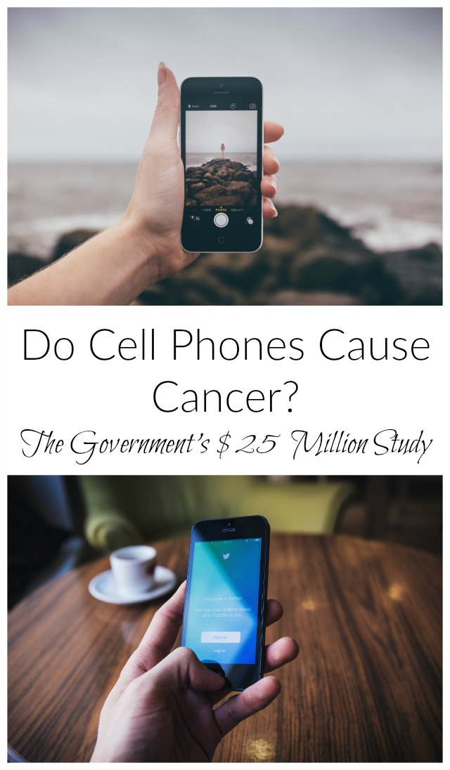 What does the NTP rat study say about the connection between cancer and cell phones