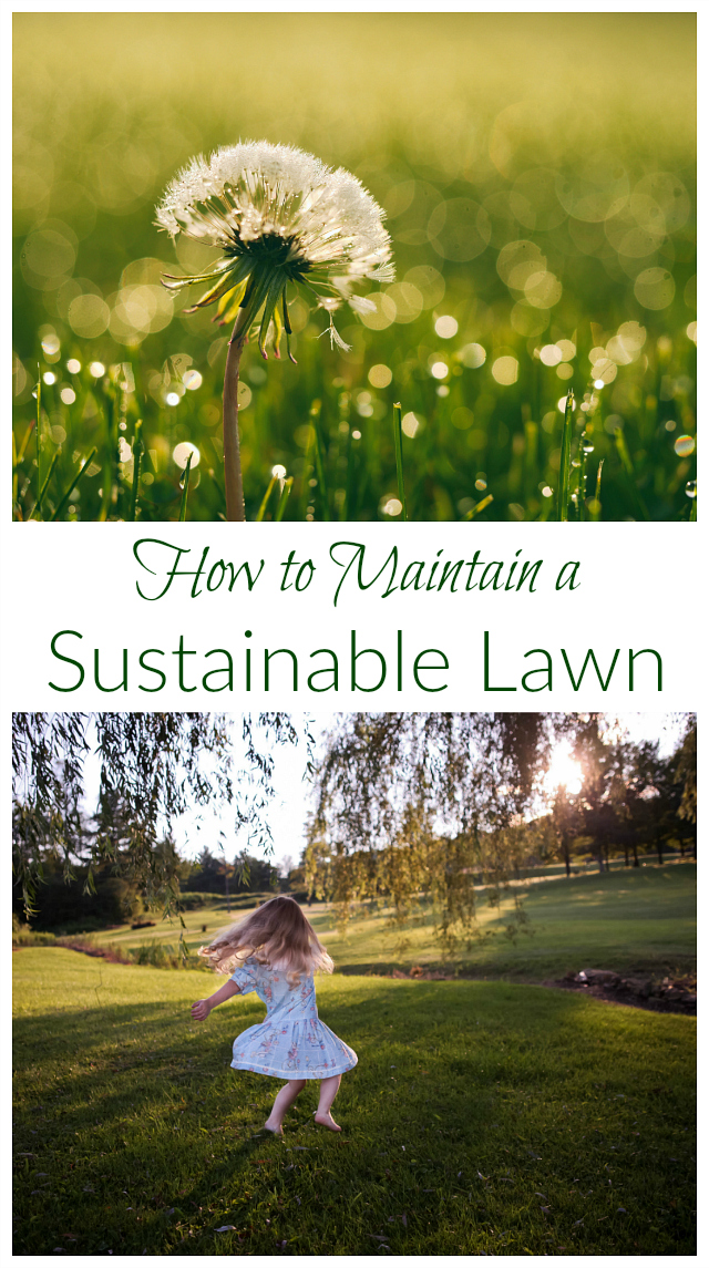 Do you feel enslaved by your lawn? Wondering how to avoid harsh chemicals? Enjoy these tips for a sustainable lawn!
