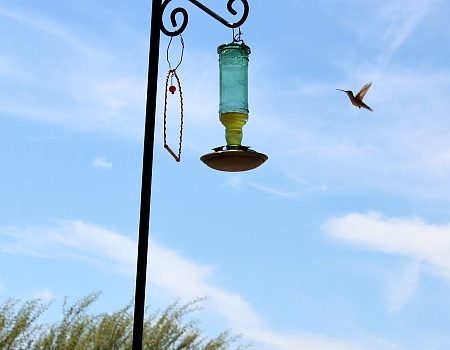 How to Attract Hummingbirds and other Pollinators