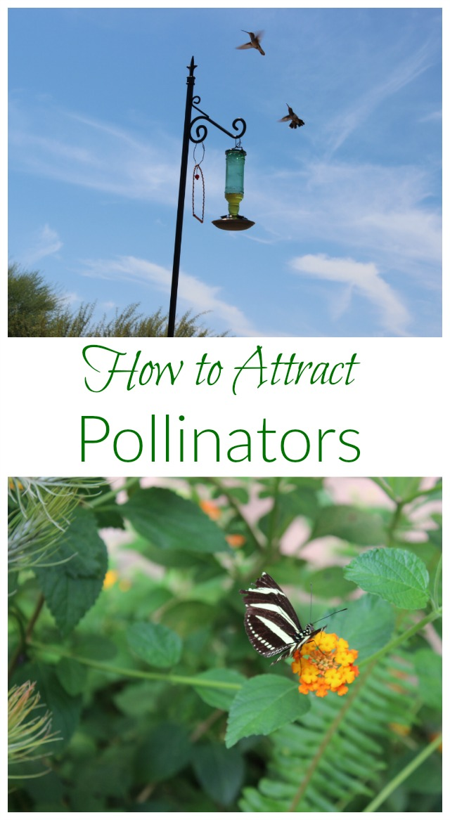 Pollinators are critical for our food supply. Find out how you can help preserve and attract these precious allies!