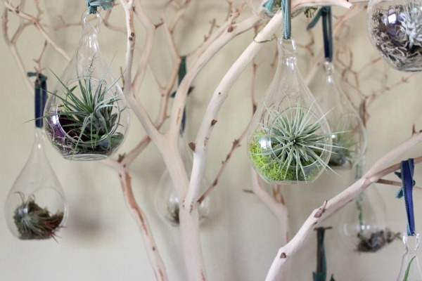 diy-manzanita-tree-with-air-plants-final
