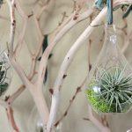 diy-natural-decor-the-manzanita-tree-with-air-plants