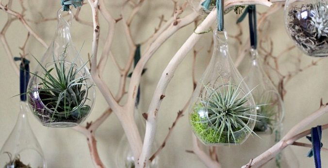 DIY Natural Decor – Manzanita Tree