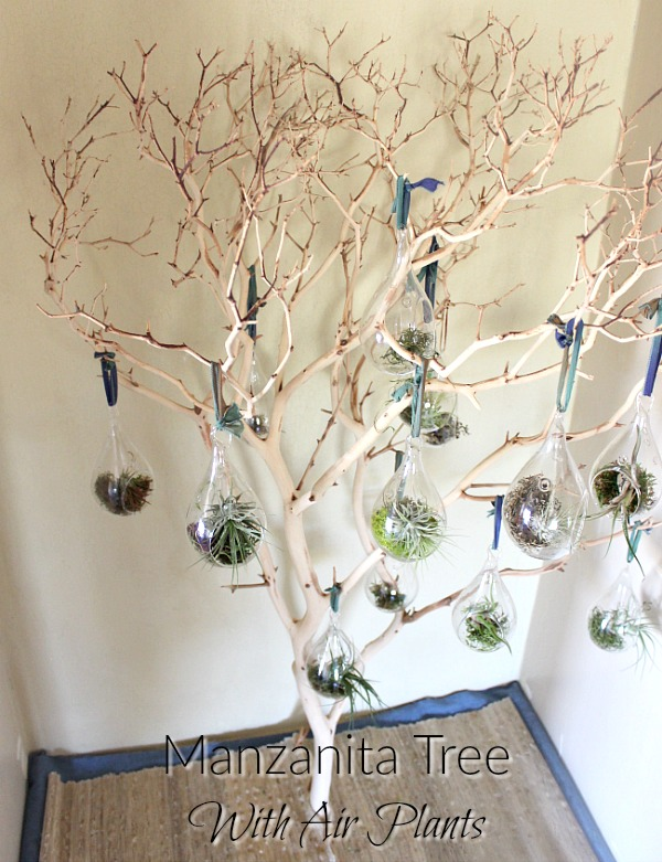 Are you interested in bringing the outdoors into your home? You'll love this natural DIY decorative manzanita tree with air plants!