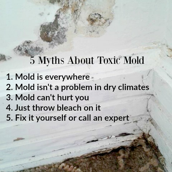 5 Myths About Toxic Mold