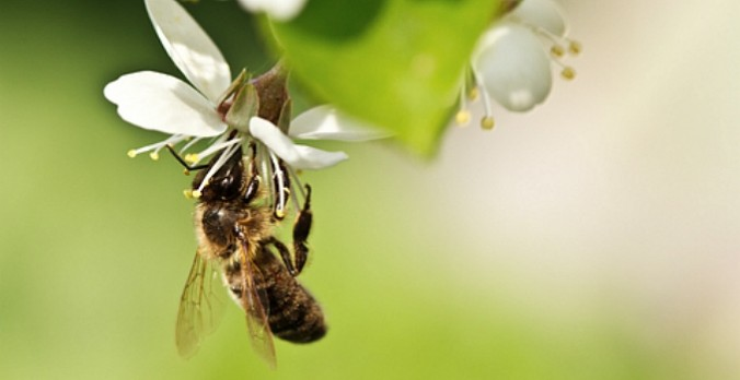 Five Ways You Can Bring Back the Bees
